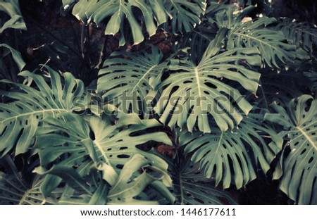 dark green palm foliage background, tropical jungle leaves #1446177611