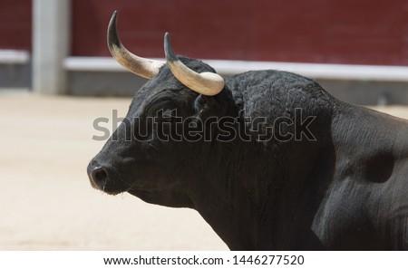 spanish bull black in bullring #1446277520