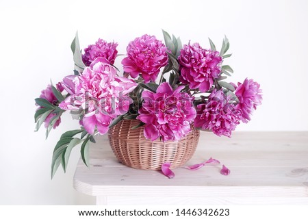 A bouquet of beautiful ,pink peonies in basket on a white background.Still life of pink peonies.