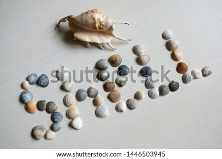 Background image with sea shells of different types. Copy space text #1446503945