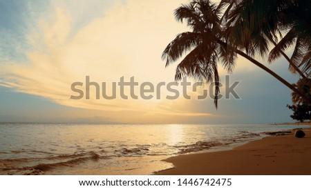 Palms over sundown sea fond. Blue sky yellow clouds and sand beach background. Indian Ocean coast  sundown sea. The waves on the shore reflect sundown sea and sky. Evening sea shore on palms beach.  #1446742475