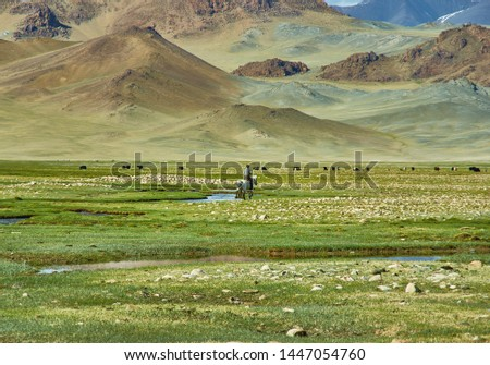 Mongolian Altai. Nomad drives herd to pasture  Scenic valley on the background of the snowcapped mountains. #1447054760
