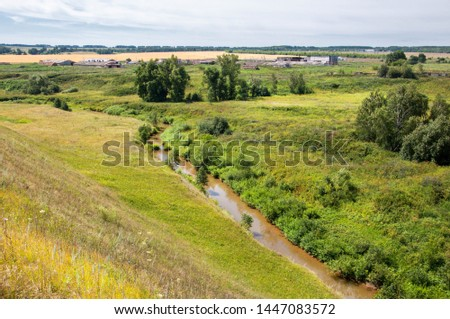 Summer landscape, ravine, grass sedge, mixed grass. Trees of pine and birch willow #1447083572