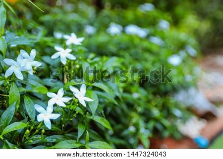 White flowers in the garden #1447324043