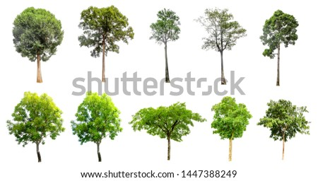 A collection of ten trees on a separate white background   #1447388249