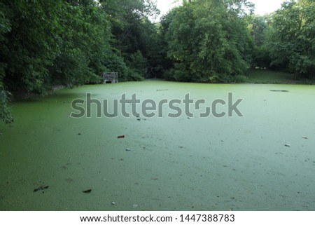 Friends hanging out at the lake in prospect park in Brooklyn NY in a picnic patio by the green algae blooms on the lake in NY July 9 2019 #1447388783