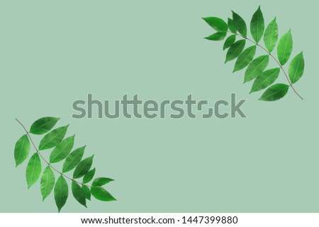 Natural leaves on a pastel green background #1447399880