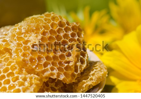 Yellow Honeycomb slice. Honey cell slice. Bowl with fresh honeycombs and honey Royalty-Free Stock Photo #1447520405
