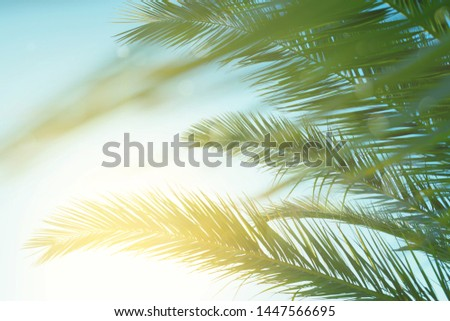 Palm leaves against blue sky at windy weather. Sea breeze, summer vacation. #1447566695