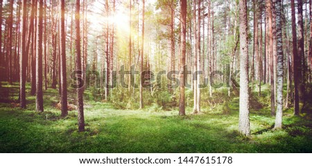 Forest nature sunrise. Summer day clear landscape #1447615178