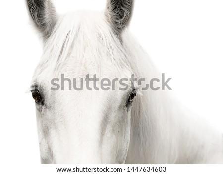 White horse head eyes white background #1447634603