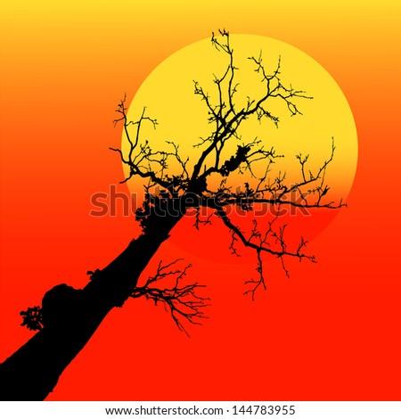 Sunset silhouette #144783955