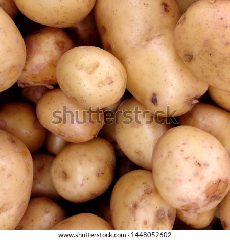 Macro photo food root vegetable potatoes. Texture vegetable white young potato. #1448052602