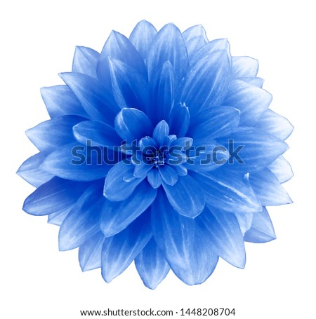 Blue Dahlia flower on a white  background.  Isolated  with clipping path. Closeup. with no shadows.  Nature.  #1448208704