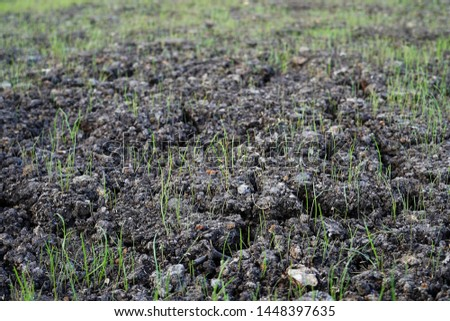 The soil of the earth, a field with growing grass. Fresh young green grass. The fields are dry, the land is broken close-up.  #1448397635