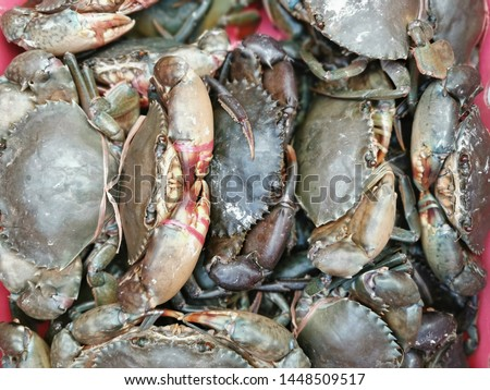 Crabs at street market with close up view. #1448509517