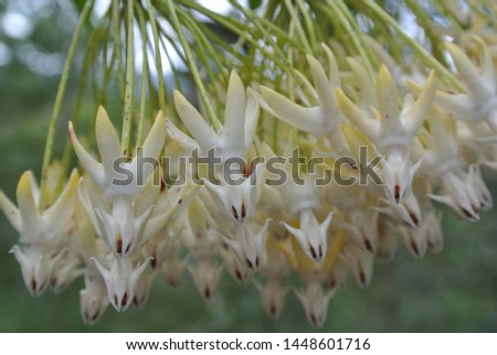 Orchid nature flower beautiful white #1448601716