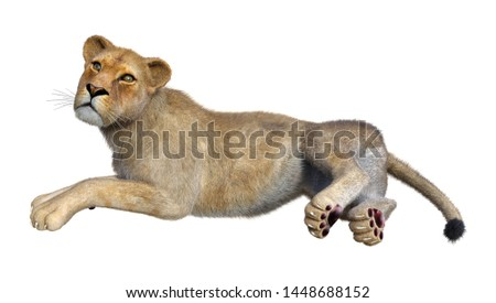 3D rendering of a female lion isolated on white background #1448688152