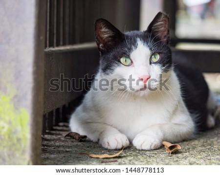 wild cat, closeup portrait photography #1448778113