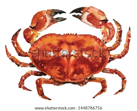Isolated watercolour painting of crab on white background