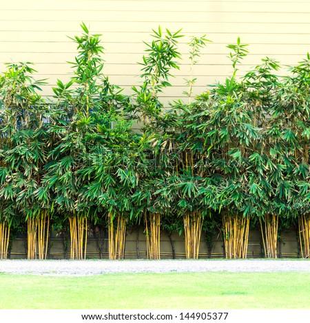 Planting bamboo wall, bamboo building a wall of heat. #144905377