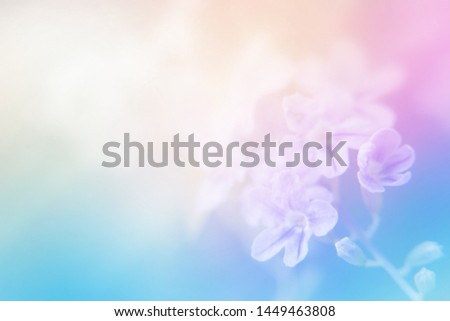 light soft bright sweet color for cool abstract nature background. flower made by pastel color filter for background. #1449463808