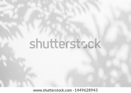 Abstract leaves shadow branch of tree background on white concrete wall texture , black and white, monochrome, nature shadow art on wall #1449628943