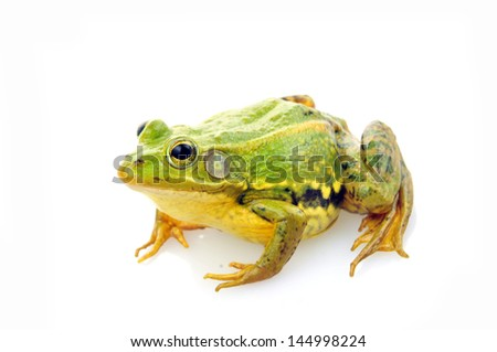 Frog isolated on a white background, and close-up pictures #144998224