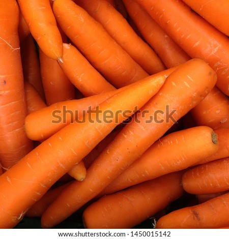 Macro Photo spring food vegetable carrot. Texture background of fresh large orange carrots. Product Image Vegetable Root Carrot #1450015142