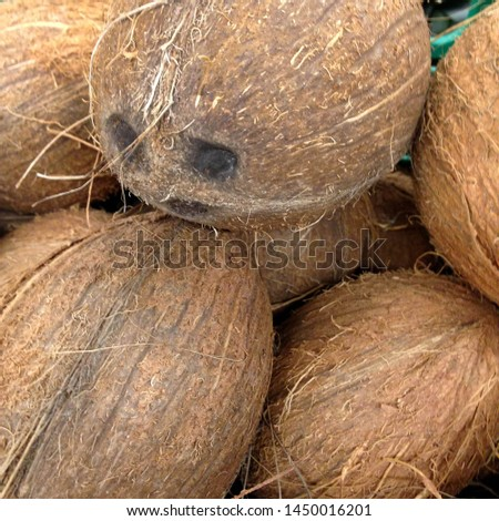 Macro photo of tropical fruit coconut. Texture hairy nuts coconut fruit. Coconuts in the shell. #1450016201