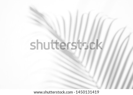 shadows palm leaf on white wall background. for creative design summer concept #1450131419