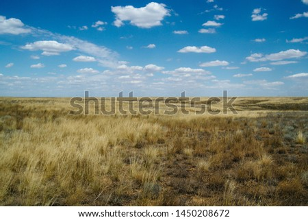 Steppe landscape. Lonely green plants on dry, hot sand.The steppe is woodless. Ravine in the steppe. #1450208672