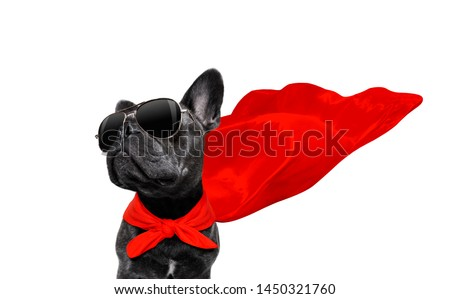 super hero french bulldog dog with  red cape and  sunglasses for justice and strenght isolated on white background