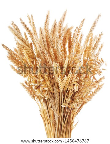 Bunch of ripe cereal. Mix of wheat ears, rye, barley and oats isolated on white background #1450476767