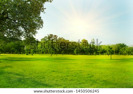 Lawn and trees green background with Beautiful lawn The shadows of the shrub are grassy smooth clean. #1450506245