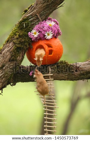 Mouse. Happy love couple of mice. Pumpkin house for Halloween party on tree. Postcard with mouse. Fun animal, pet. Talented mouse. St. Valentine's Day. Sweet lovers. Halloween flowers house. Present #1450573769