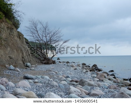 a nice scenery at the baltic sea on the island of rügen, a fallen tree lies at the stony beach #1450600541