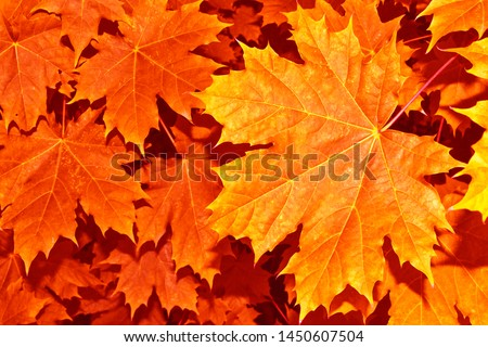 autumn landscape with bright colorful leaves. Indian summer. #1450607504