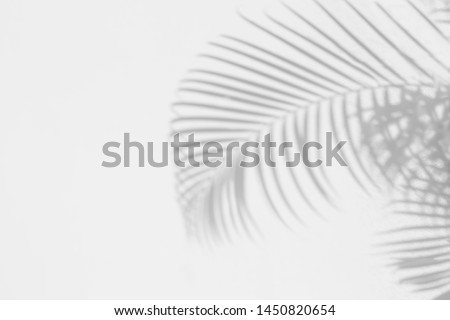 Palm leaves Abstract gray shadow background on white concrete wall texture, black and white, monochrome  #1450820654