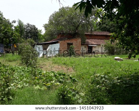 Indain village home,natural beauty near home desi style home village pets cow village road on indian village attractive homes with gardening #1451043923