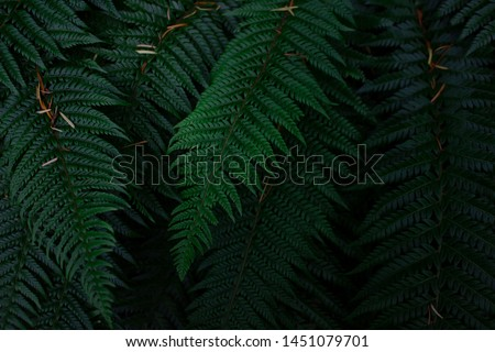dark green fern leaves background #1451079701