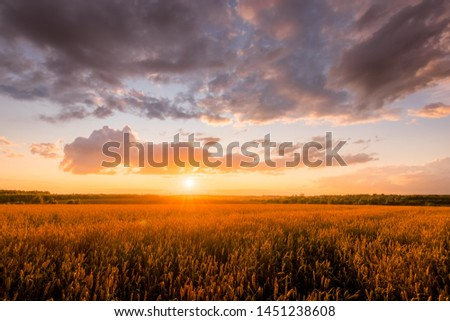 Scene of sunset on the field with young rye or wheat in the summer with a cloudy sky background. Landscape. #1451238608