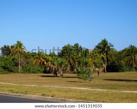 The beach of Caribbean sea on Havana, Cuba #1451319035