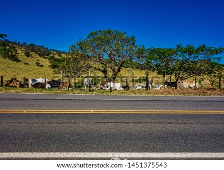 Photo of road in mountains of Minas Gerais, Brazil, with fence and pasture with livestock beside in afternoon sun and blue sky #1451375543