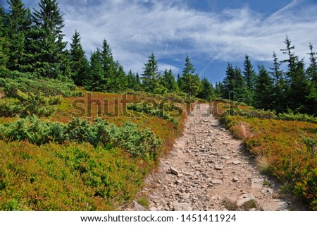 mountain pathway in pine wood colorful with blue sky #1451411924