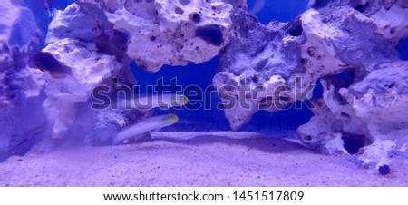 Sea sea life sea fish deep sea #1451517809