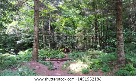 Beautiful forest pine landscape with railway tracks passing through the forest #1451552186