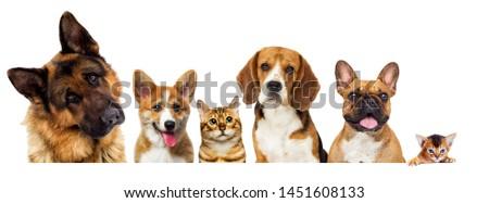 portrait of dogs looking on a white background #1451608133