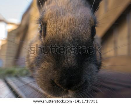 Little, yellow baby rabbit eating grass #1451719931