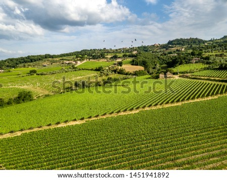 The vineyard of Montalcino in Siena, Toscana Italy. #1451941892